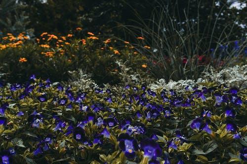 Fotos de stock gratuitas de bonito, delicado, exuberante, flora