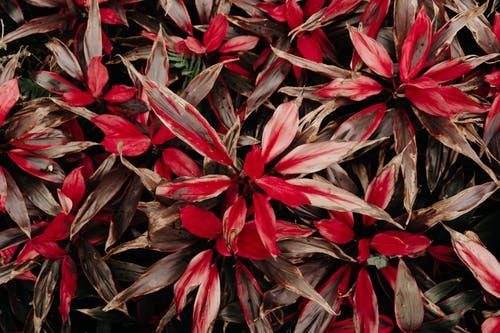 Základová fotografie zdarma na téma barvy, botanický, červená, krajina