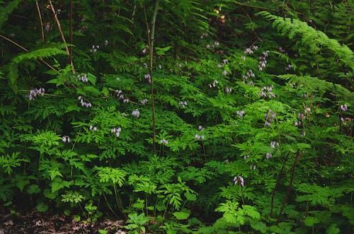 Fotos de stock gratuitas de bosque, corazón sangrando, corazón sangrante pacífico, flores