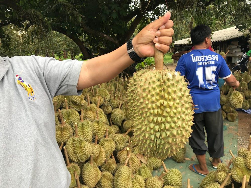 亚洲水果, 曼谷, 榴莲 的 免费素材图片