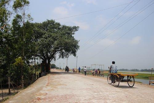 Foto d'estoc gratuïta de arbre, carretera, fusta, natura