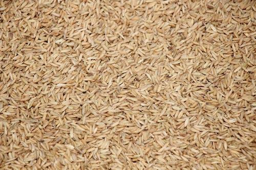 Foto d'estoc gratuïta de arròs, escriptori, estampat, sec