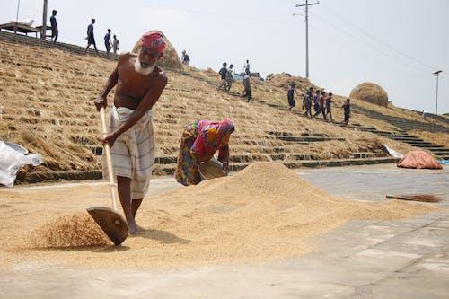 Foto d'estoc gratuïta de agricultors, arròs, terrasses d'arròs