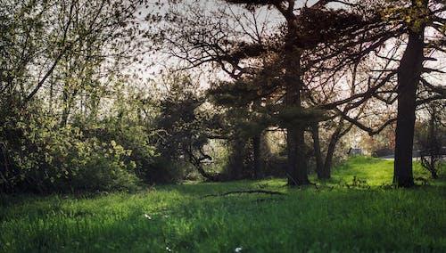 คลังภาพถ่ายฟรี ของ ต้นไม้, พื้นหลัง, วอลล์เปเปอร์