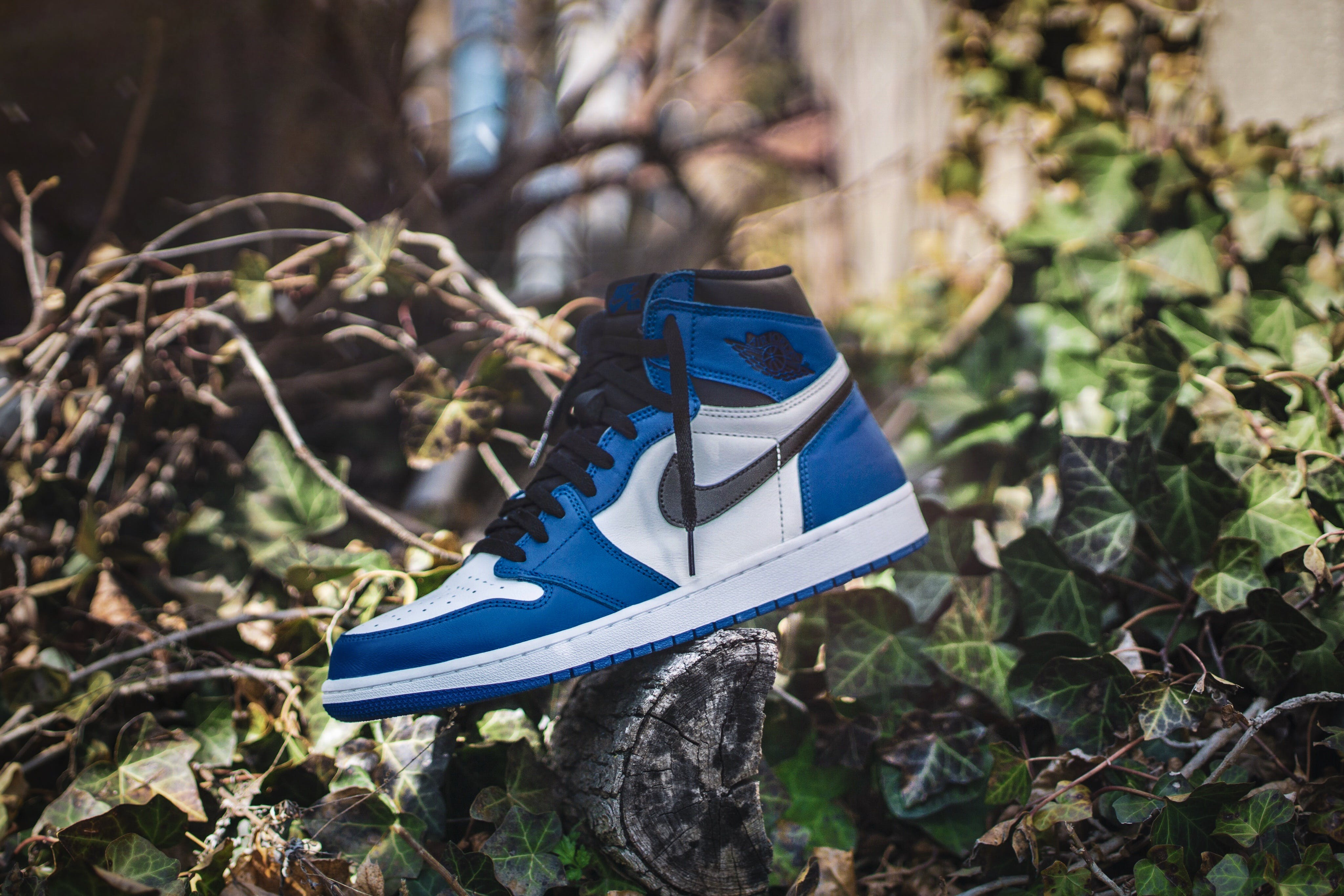 Blue and White Air Jordan 1 on Gray Wood Log at Daytime