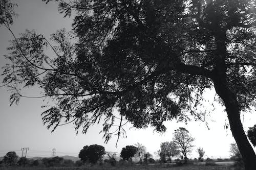 Kostenloses Stock Foto zu abendhimmel, bäume, bewölkt, bewölkter himmel