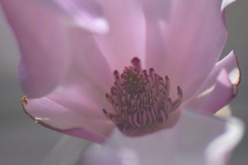 çiçek, Çiçek tomurcuğu, Çiçek tomurcukları içeren Ücretsiz stok fotoğraf