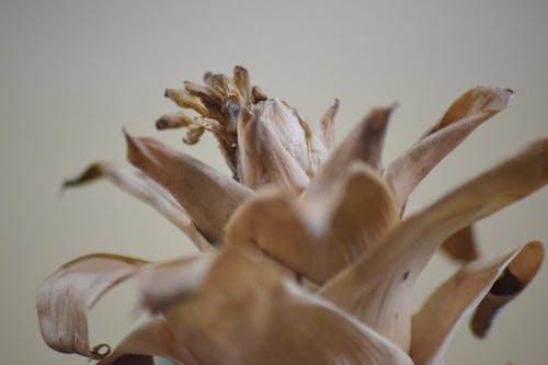 Ảnh lưu trữ miễn phí về cây héo, hoa chết, lá chết, nâu