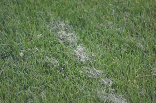 Ảnh lưu trữ miễn phí về cắt cỏ, cỏ, màu xanh lá