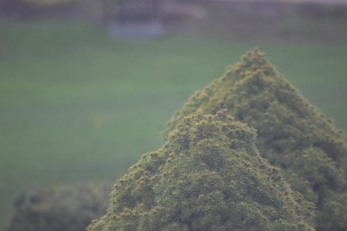 Ảnh lưu trữ miễn phí về bụi cây, đẹp, màu xanh lá, sương mù