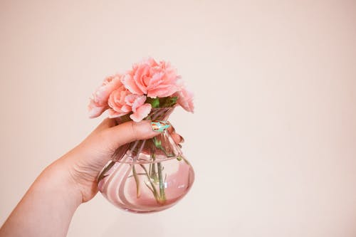 꽃, 꽃병, 꽃잎, 분홍색 꽃의 무료 스톡 사진