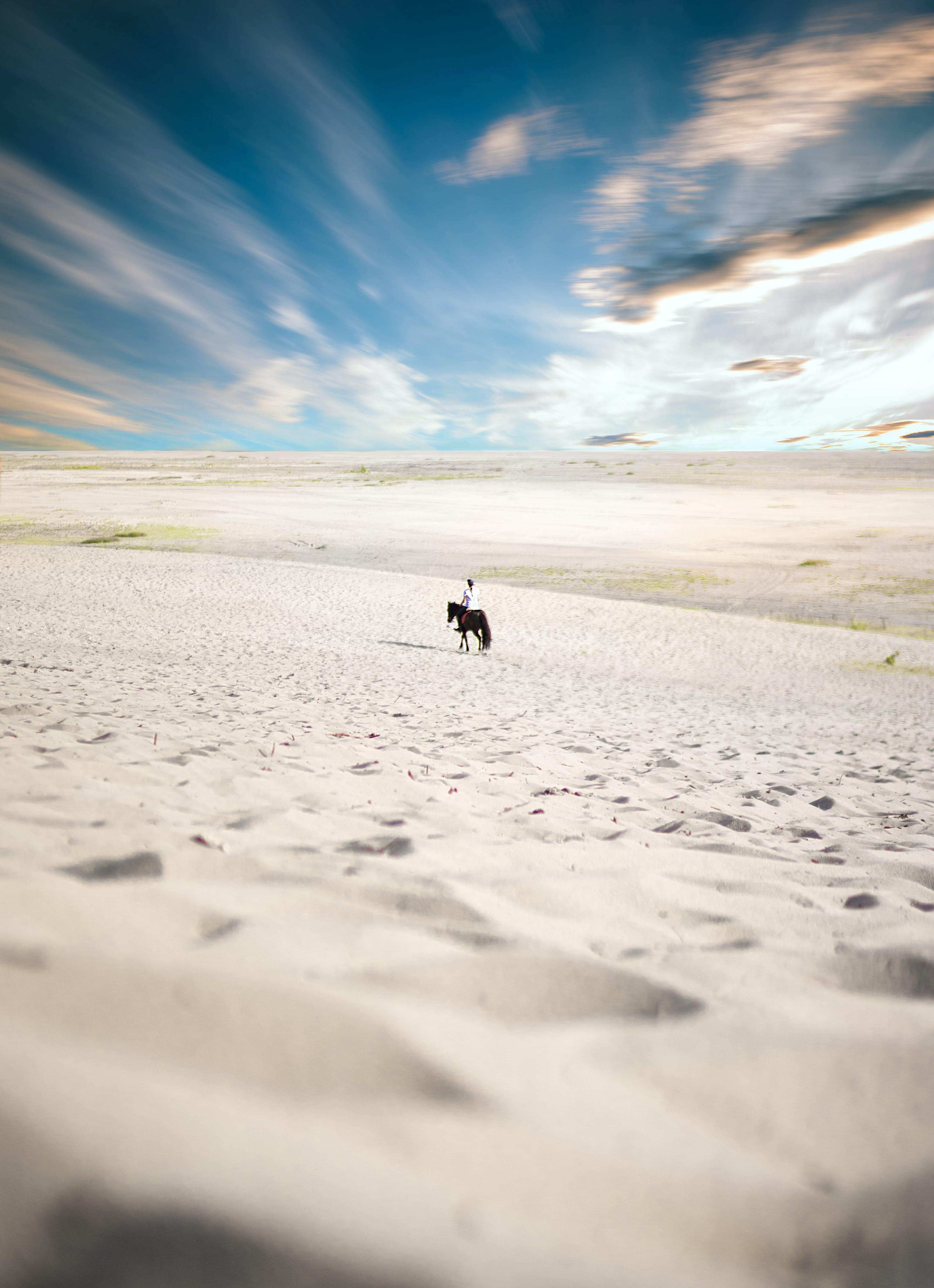 Безкоштовне стокове фото на тему «Денне світло, кінь, пісок, піщані дюни»