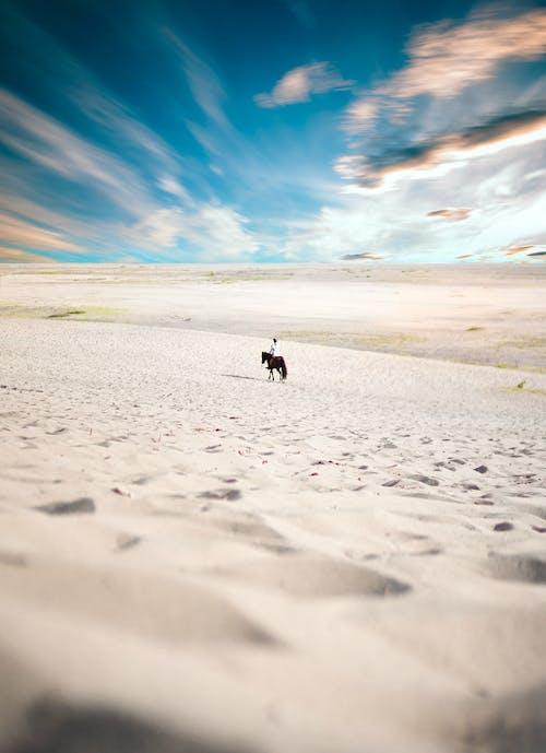 Kostenloses Stock Foto zu dürr, person, pferd, sand