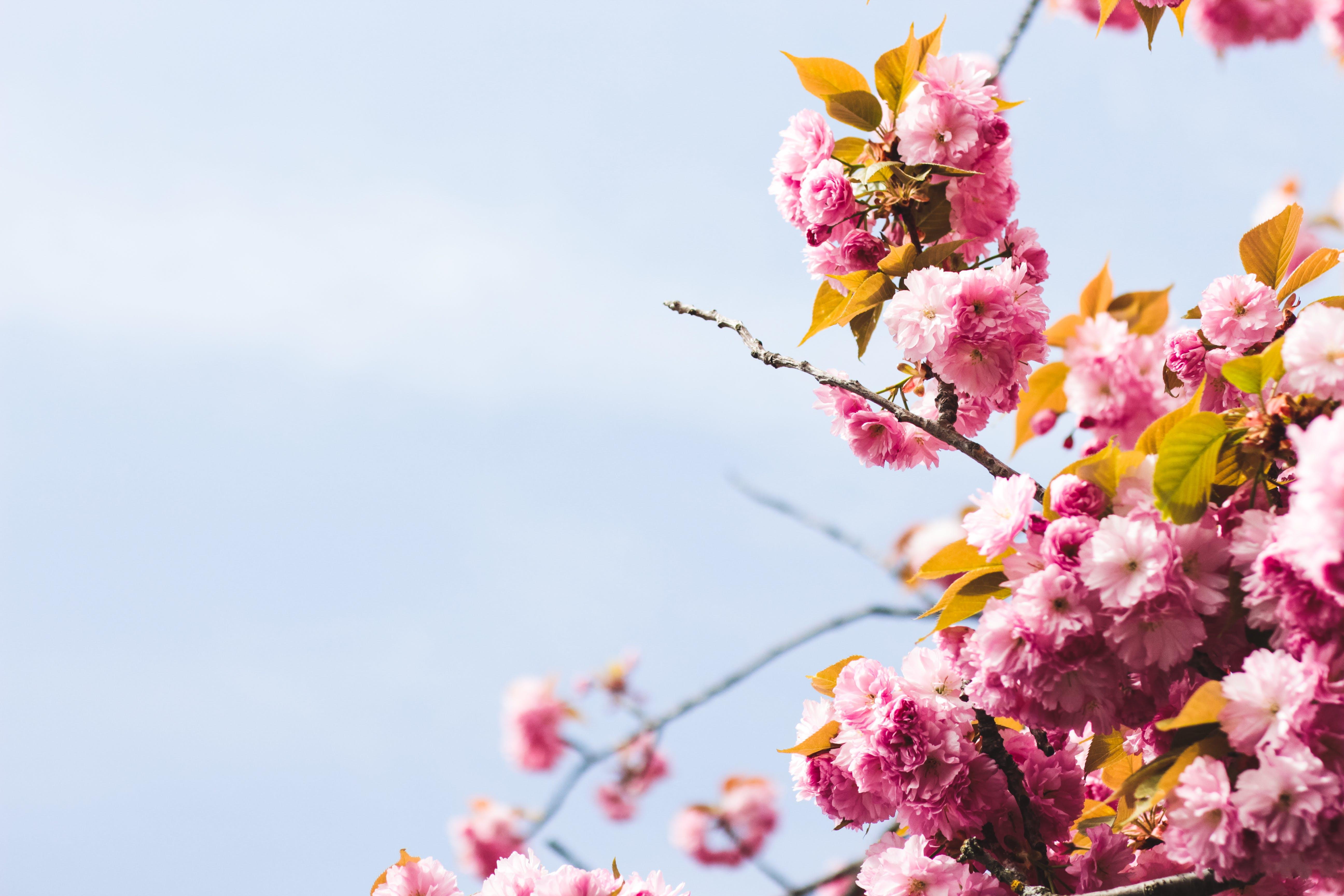 Darmowe zdjęcie z galerii z delikatny, flora, głębia pola, kwiat