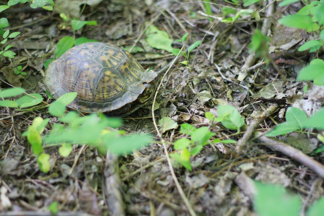 in shell, turtle, woods