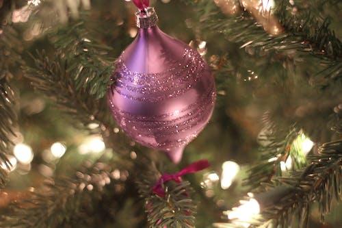 Ingyenes stockfotó fa, izzók, Karácsony, lila témában