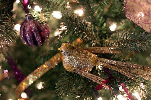 Ingyenes stockfotó Arany, Karácsony, lila témában