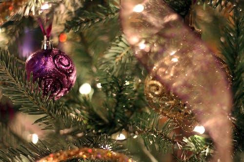 Ingyenes stockfotó karácsonyfa, lila témában