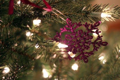 Ingyenes stockfotó hópehely, Karácsony, lila témában