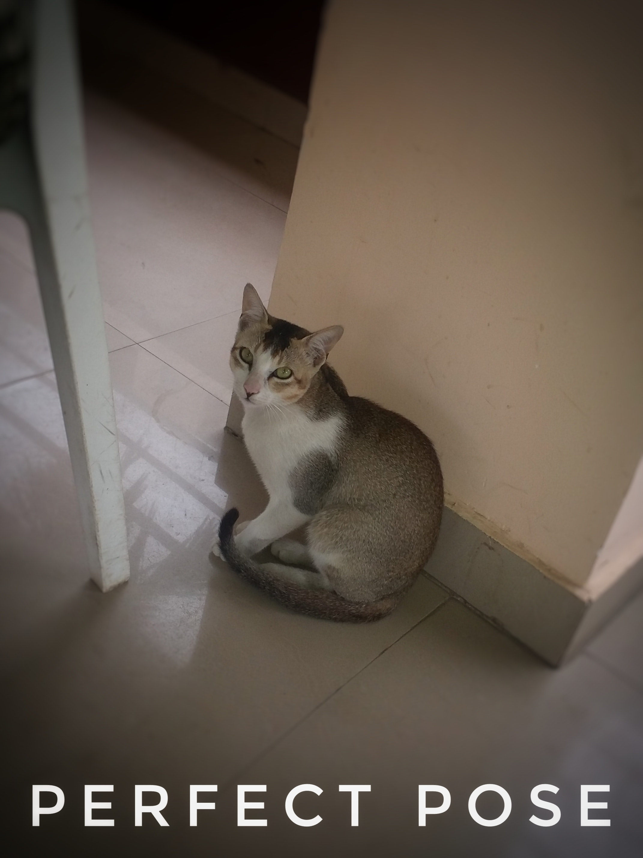 Free stock photo of CAT WATCHING ME