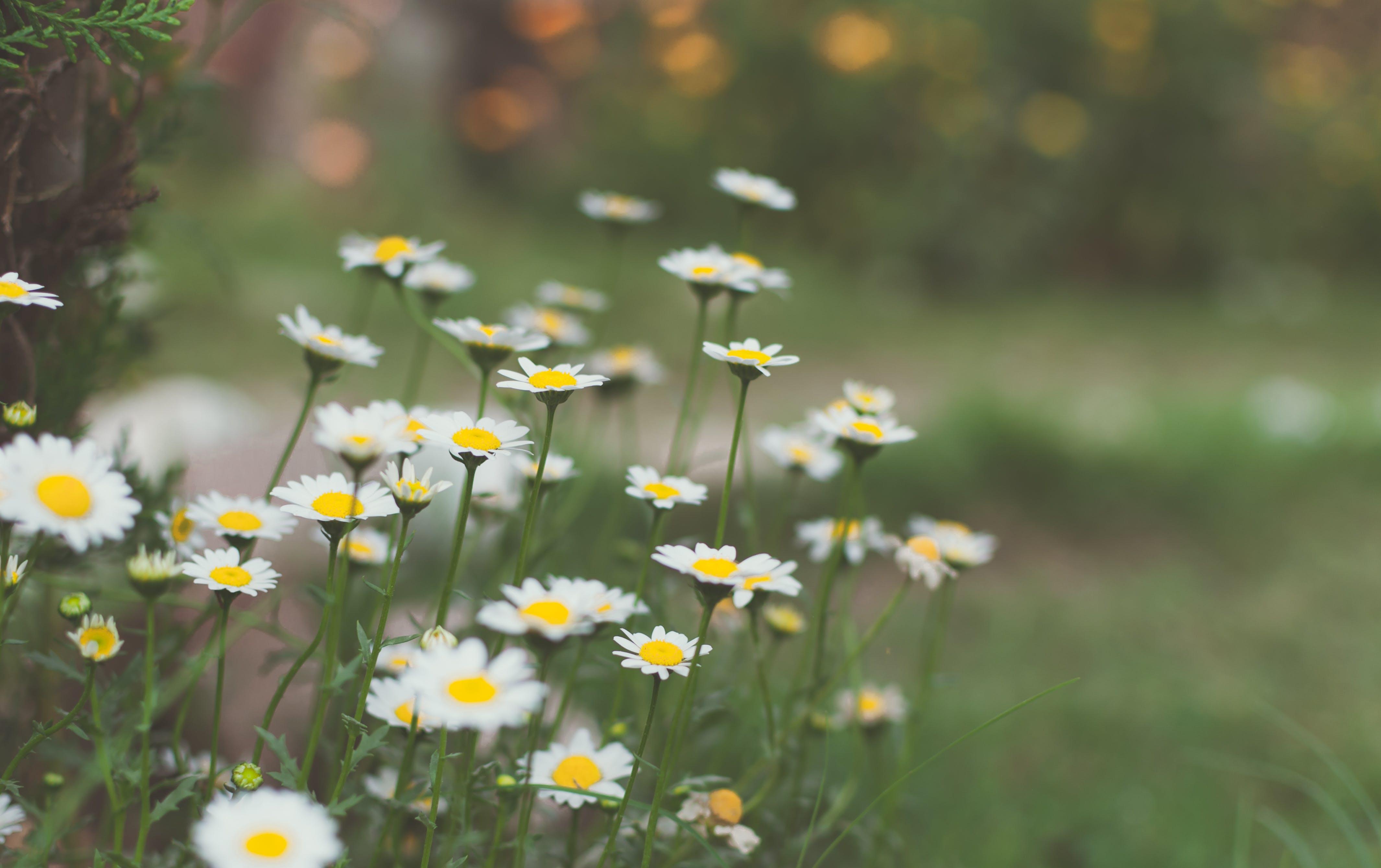 Free stock photo of beautiful flowers, bunch of flowers, flower wallpaper, HD wallpaper