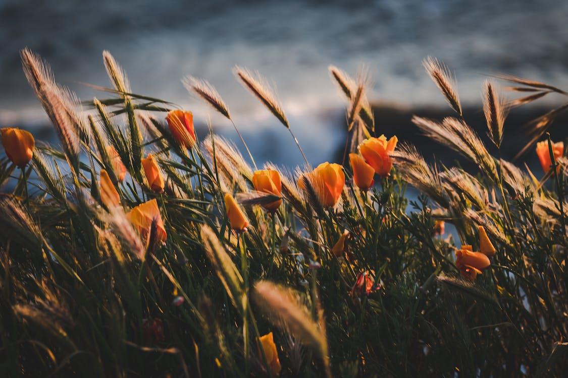 concentrarse, crecimiento, efecto desenfocado