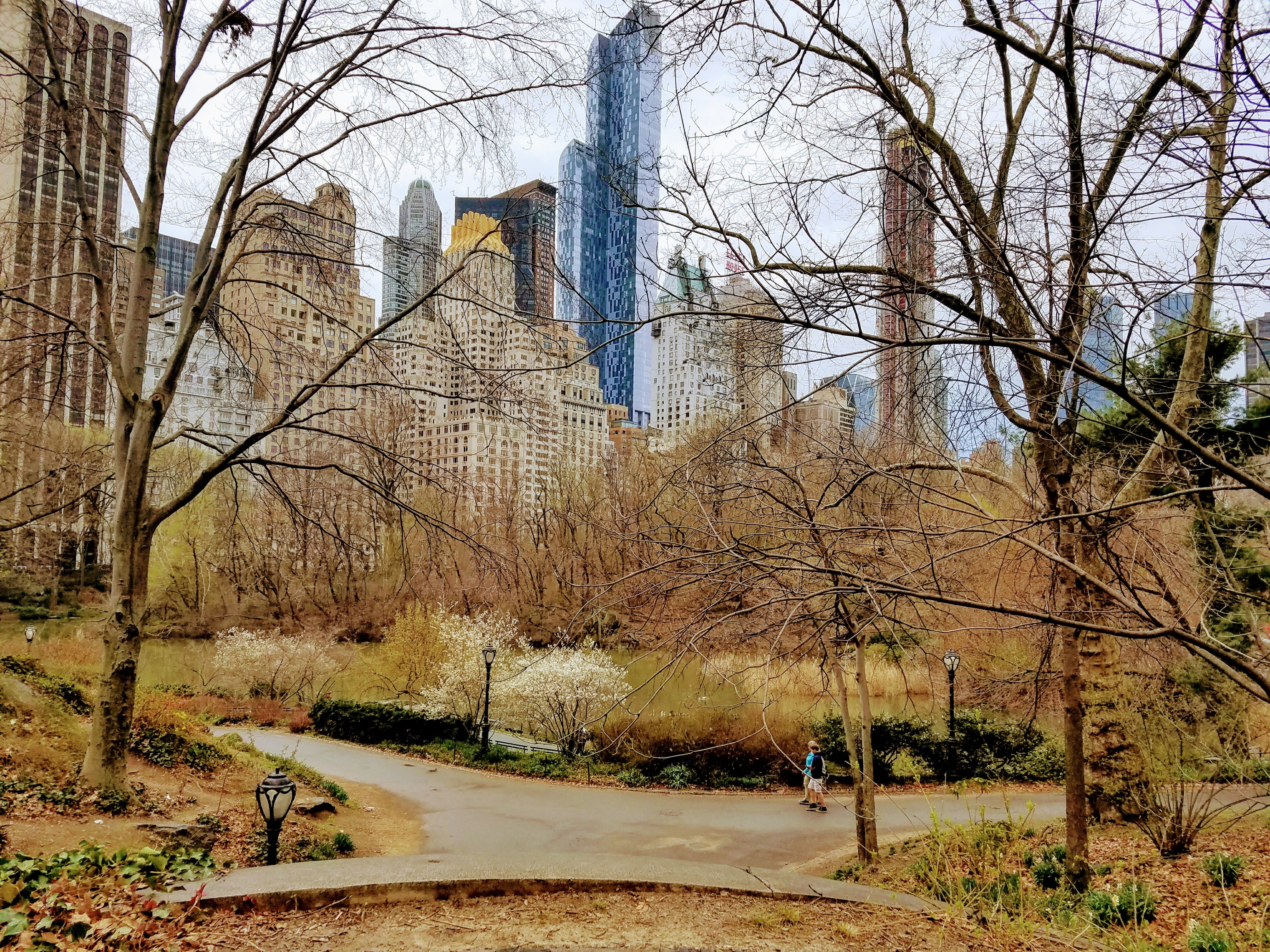 Free stock photo of central park, manhattan, new york, new york city