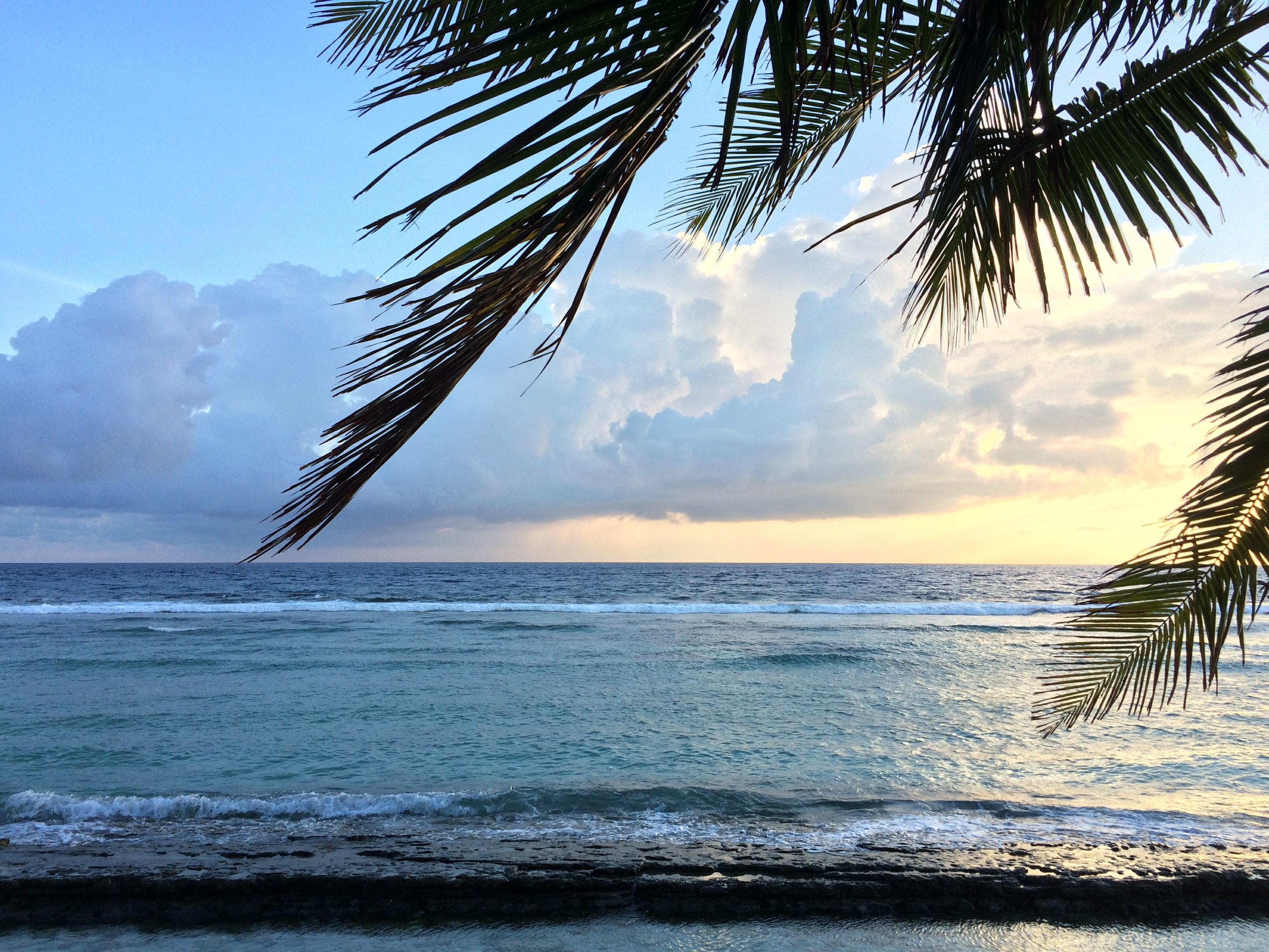 Free stock photo of beach front, coconut tree, coconut tree leaf in beach front