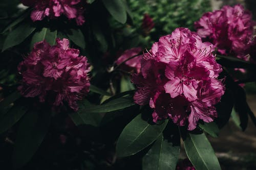 Photography Of Pink Petaled Flowers