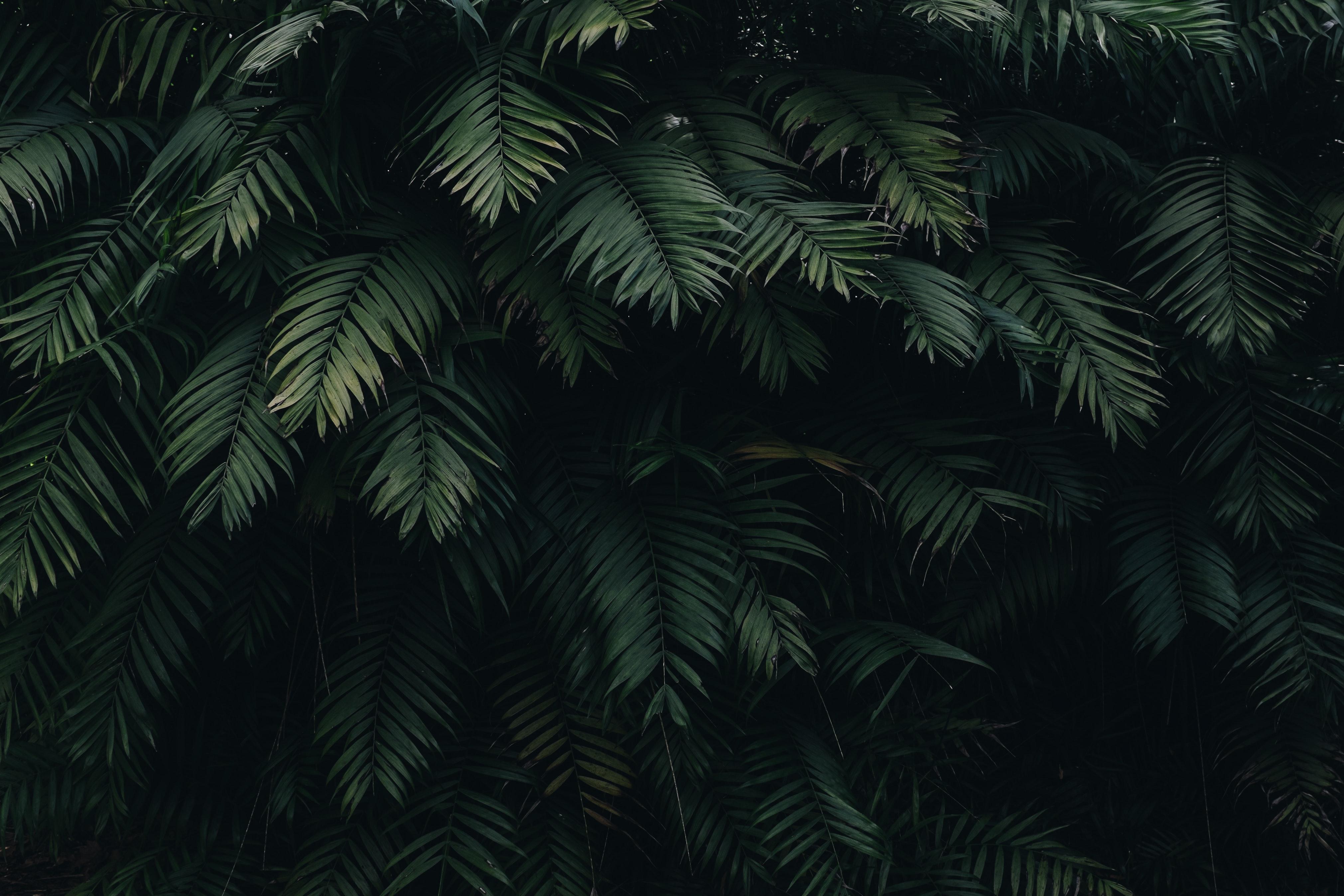 Ac96 Wallpaper Apple Iphone6 Plus Ios8 Flower Green: 1000+ Amazing Trees Photos · Pexels · Free Stock Photos