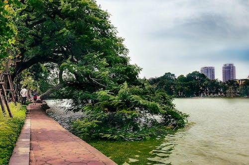 Δωρεάν στοκ φωτογραφιών με hanio, δημοτικό πάρκο