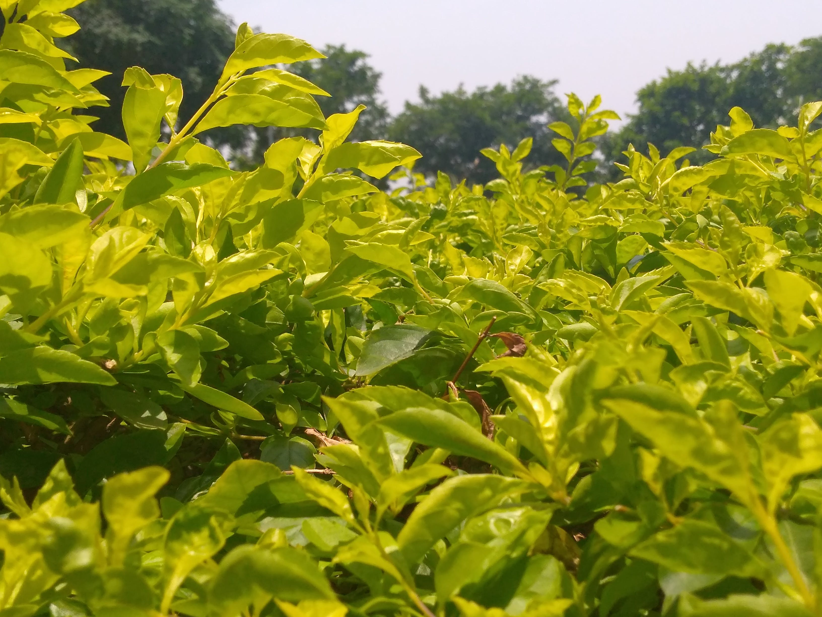 Δωρεάν στοκ φωτογραφιών με φύλλα