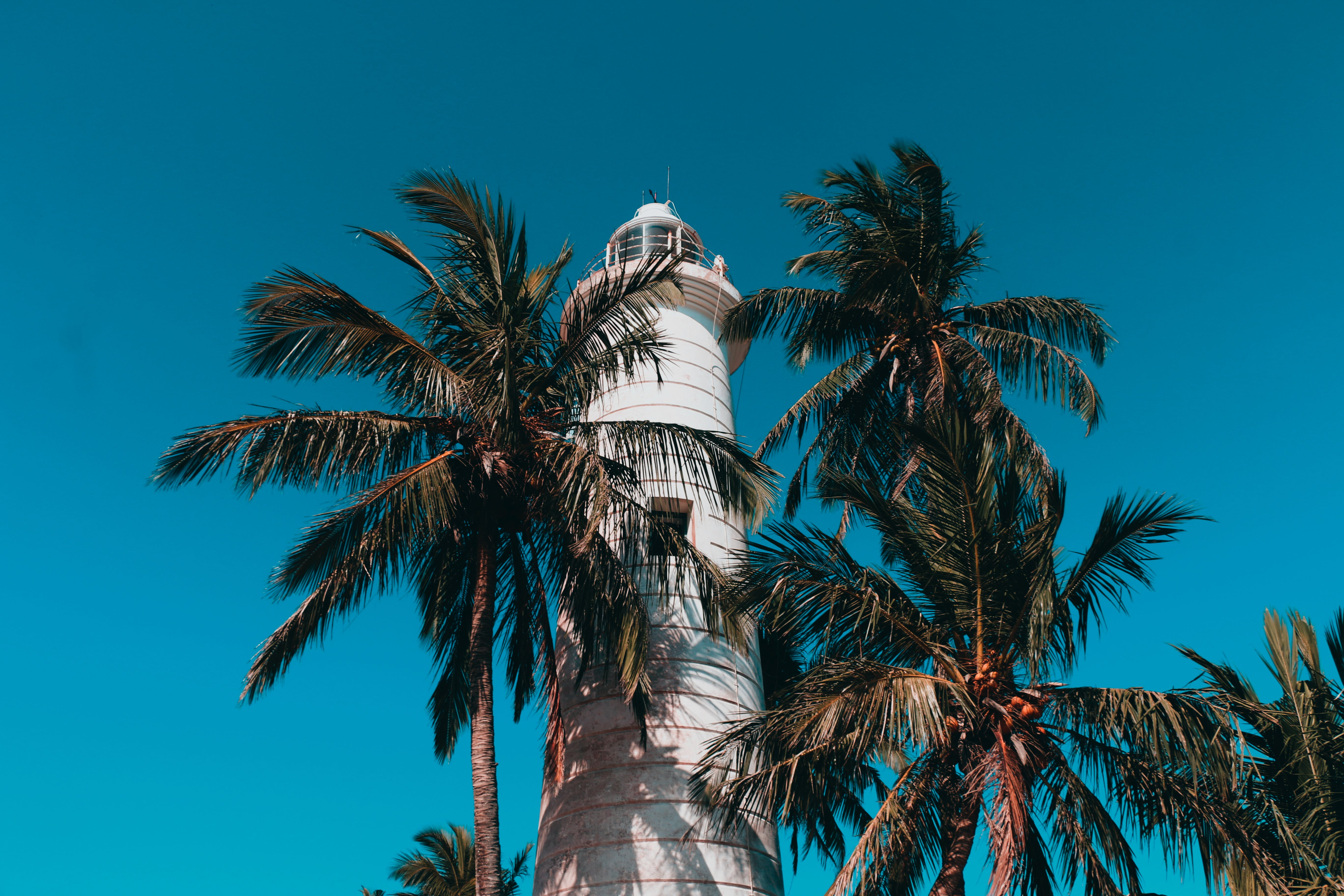 Lighthouse And Coconut Trees