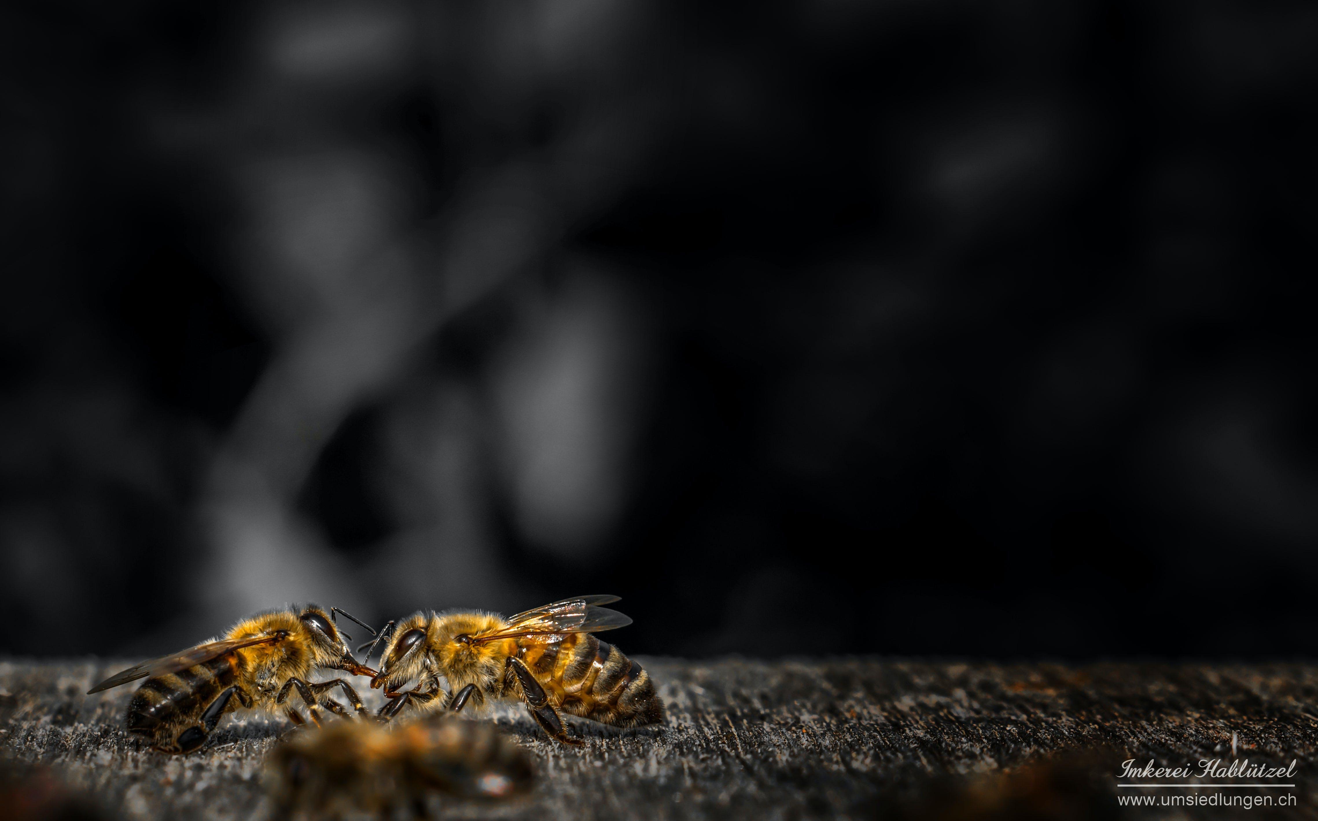 Ảnh lưu trữ miễn phí về ảnh macro, con ong, mật ong, nhiếp ảnh vĩ mô