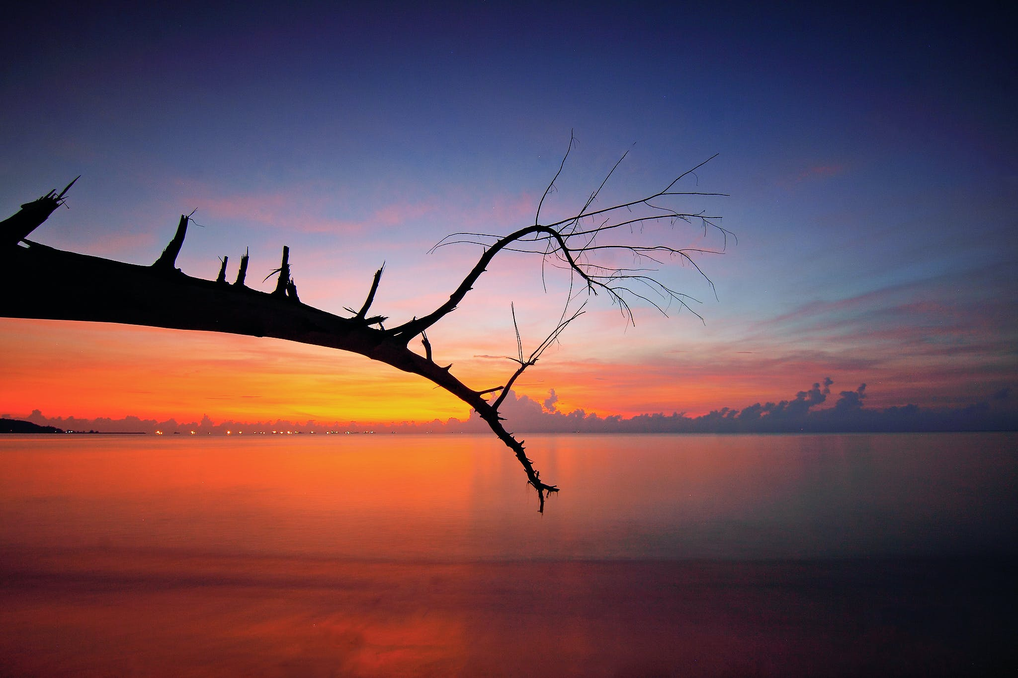 Bare Tree Branch Near Body Of Water During Sunset