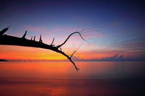 คลังภาพถ่ายฟรี ของ ชายทะเล, ชายหาด, ตะวันลับฟ้า, ทะเล