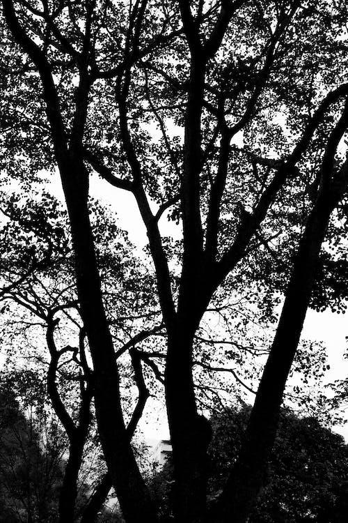 Kostenloses Stock Foto zu #wald, bäume, schwarz, schwarz und weiß