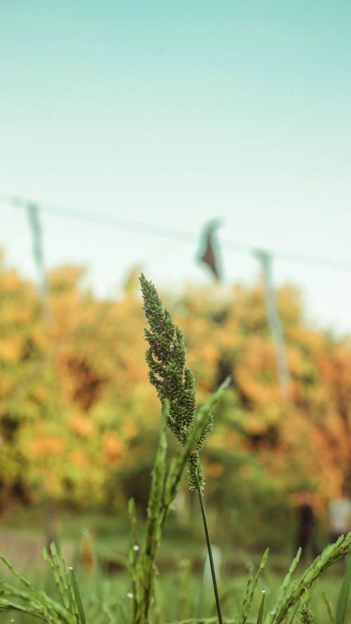 자연 바탕화면, 초록색 잎의 무료 스톡 사진