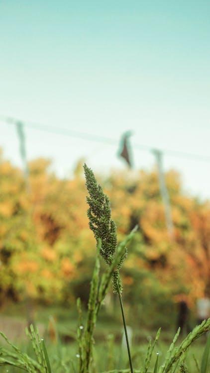 зеленый лист, обои с видами природы