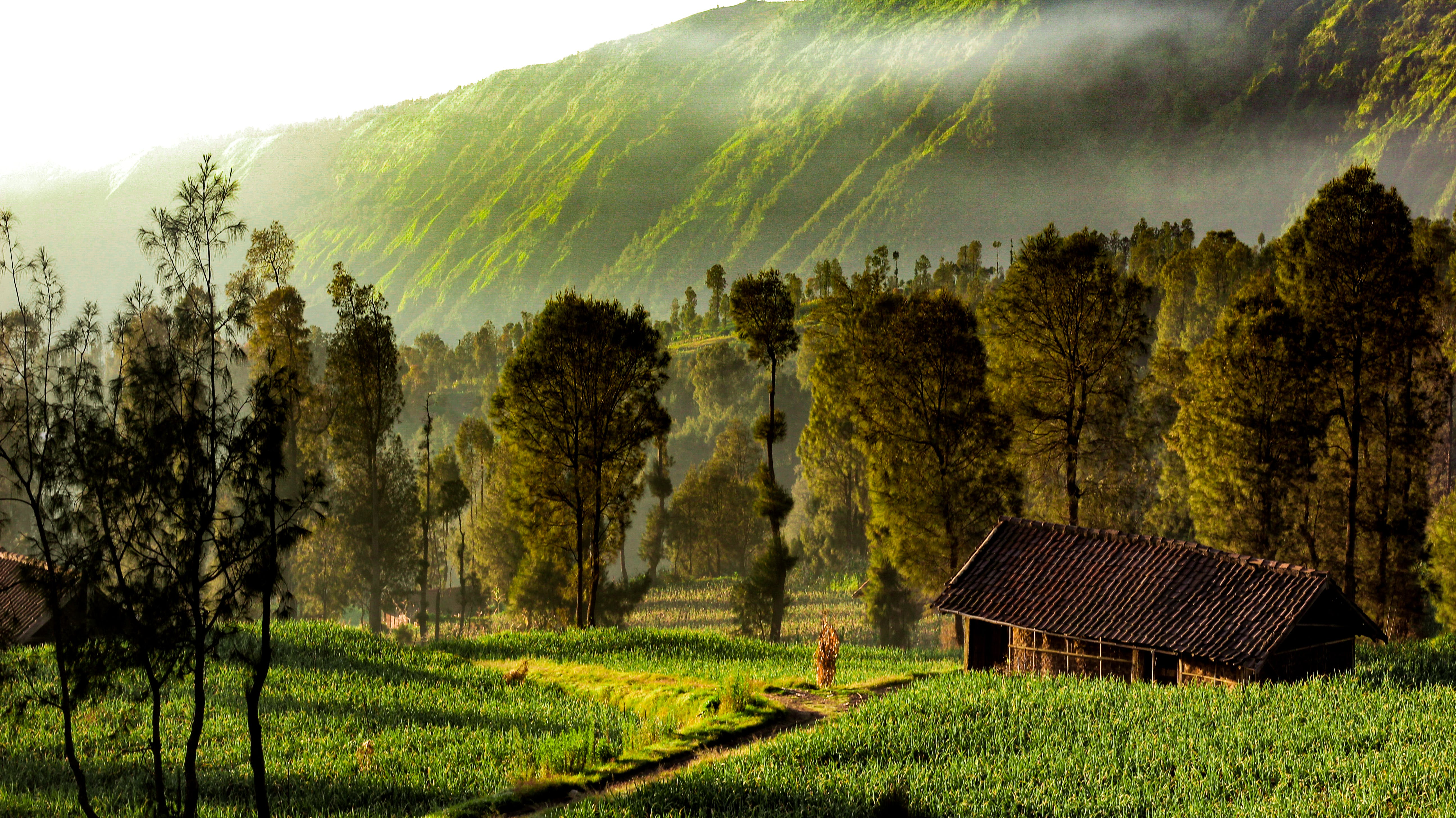 Free stock photo of early morning, green field, landscape, nature wallpaper
