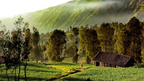 Základová fotografie zdarma na téma brzké ráno, krajina, příroda tapeta, zelené pole