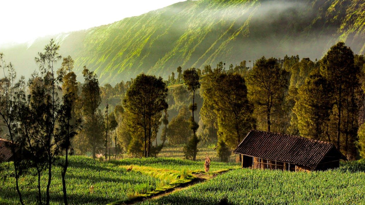 зеленое поле, обои с видами природы, пейзаж