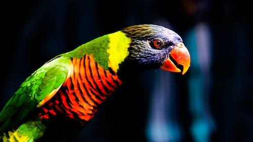 Základová fotografie zdarma na téma fotografování zvířat, papoušek