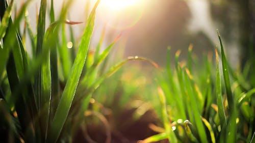 Základová fotografie zdarma na téma cibule netěsnosti, příroda tapeta, ranní světlo, Sluneční paprsky