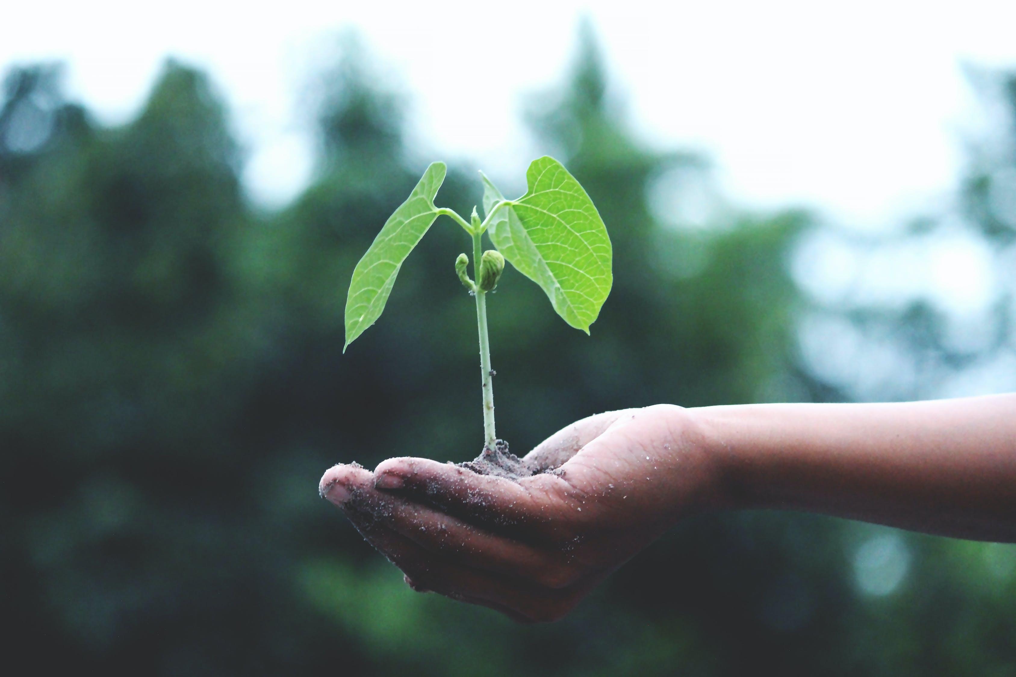 anlegg, bærekraft, frø