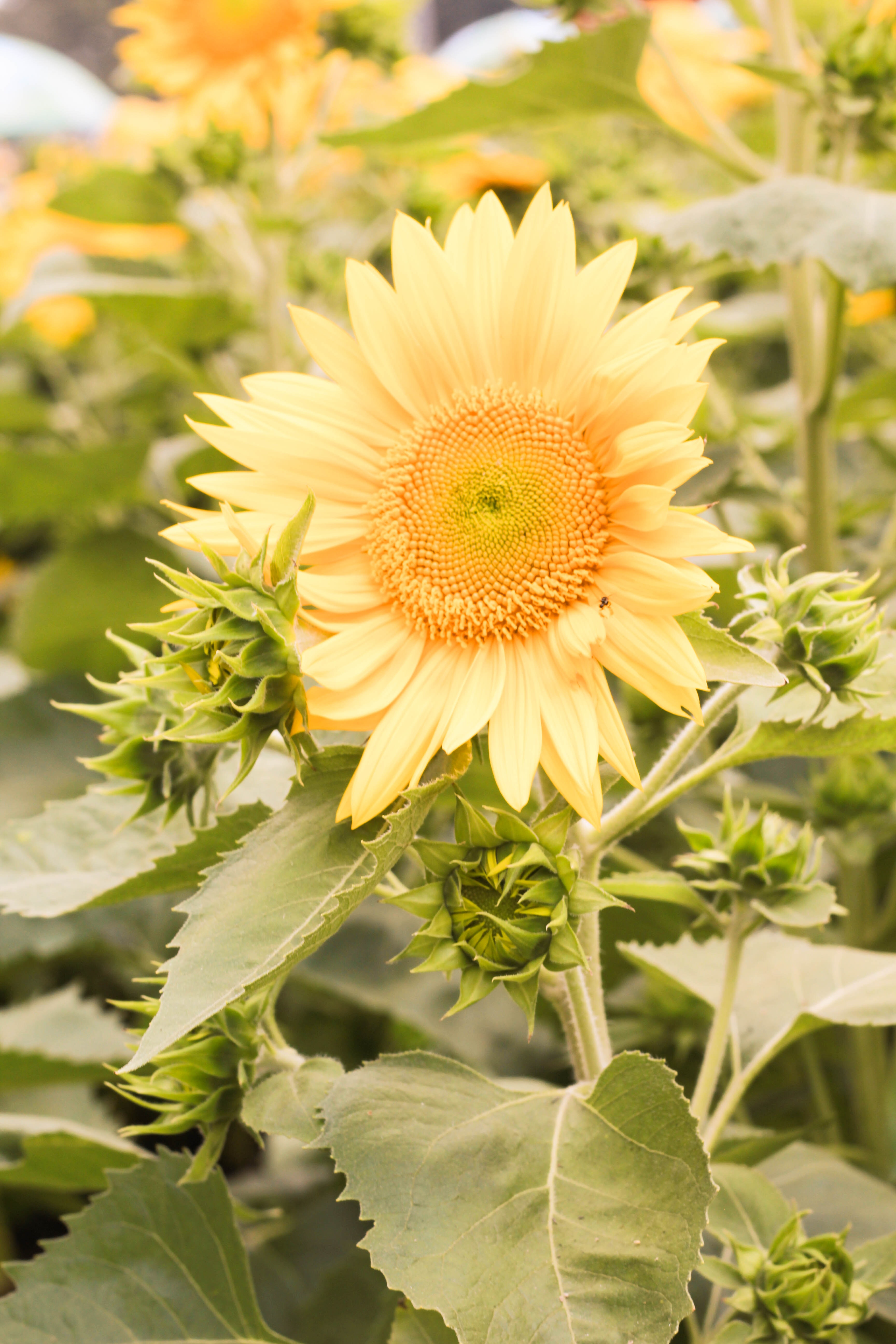 Free stock photo of beautiful flowers beauty flowers free download izmirmasajfo