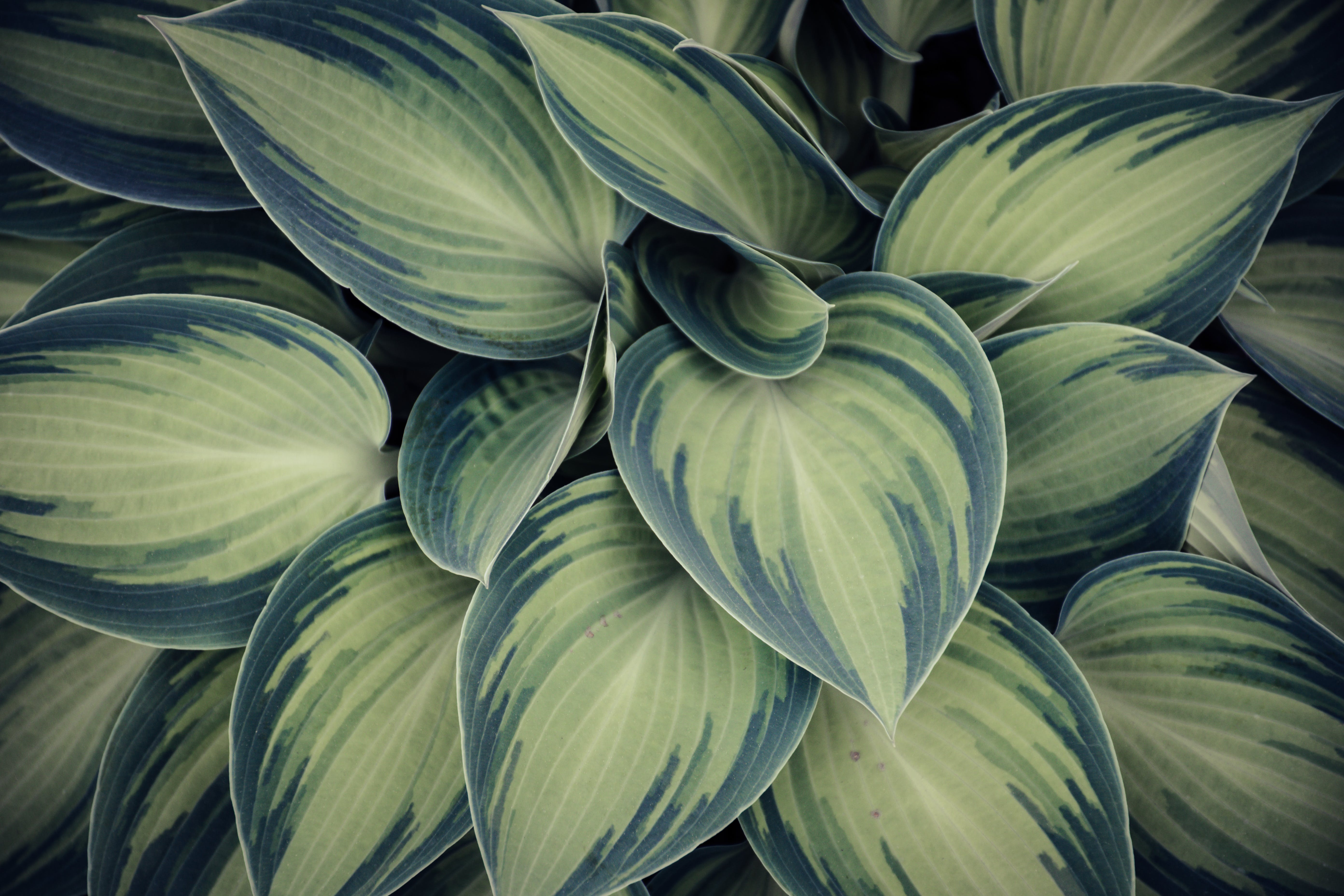 Closeup Photo of Green Variegated Leaf Plants