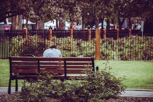 공원, 공원 벤치, 벤치, 사람의 무료 스톡 사진