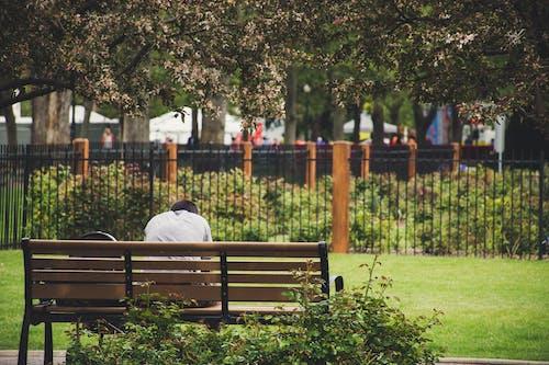 Kostnadsfri bild av bänk, flora, man, park