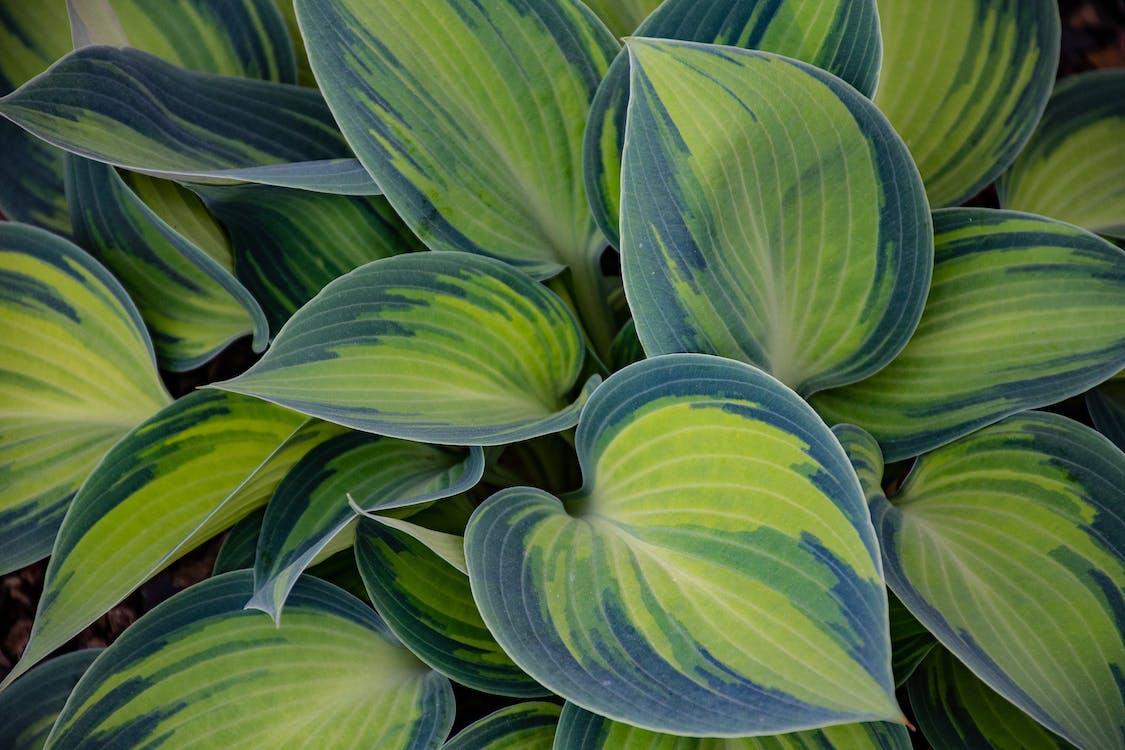 anlegg, botanisk, farger
